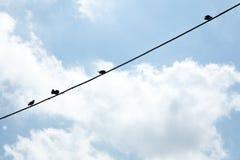 Птицы вися на проводе, Стоковая Фотография RF