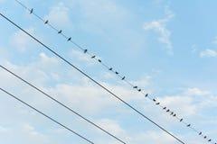 Птицы вися на электрическом проводе Стоковое Изображение RF