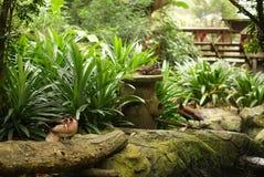 Птицы вися среди плотной растительности Стоковая Фотография RF