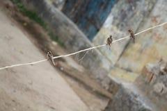 3 птицы воробьев стоковая фотография rf