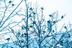Птицы воробья на ветвях дерева Стоковые Изображения