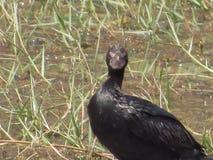 Птицы воды Стоковое Изображение