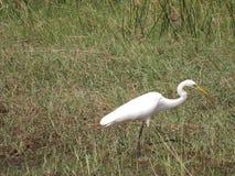 Птицы воды Стоковое Фото