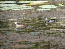 Птицы воды Стоковые Фото