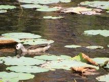 Птицы воды Стоковое фото RF