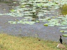 Птицы воды Стоковые Изображения RF