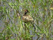 Птицы воды Стоковая Фотография