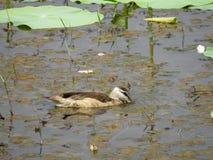 Птицы воды Стоковые Изображения