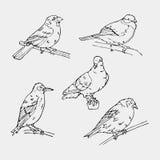 Птицы выгравировали стиль Штемпель, уплотнение Простой эскиз Стоковое Изображение