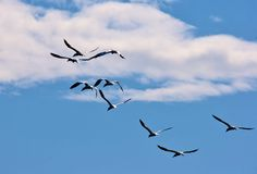 Птицы в лагуне n ³ rlà ¡ Jökulsà Стоковые Изображения