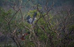 Птицы в бое Стоковая Фотография RF
