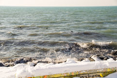 Птицы в водах зимы портового района Pomorie Чёрного моря, Болгарии Стоковая Фотография RF