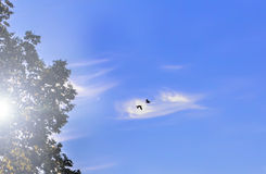 2 птицы в голубом небе Стоковое Фото