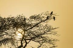 Птицы в дереве с заходом солнца Стоковые Фото