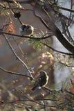Птицы в дереве Стоковые Фотографии RF