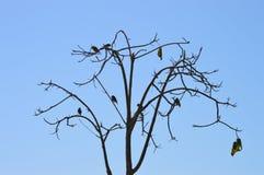 Птицы в дереве jacaranda зимы Стоковая Фотография
