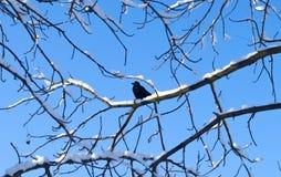 Птицы в зиме Птица садилась на насест на ветви дерева с предпосылкой голубого неба зима белизны снежинок предпосылки голубая Стоковое Фото