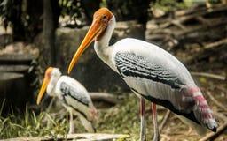 Птицы в зоопарке Стоковые Фотографии RF