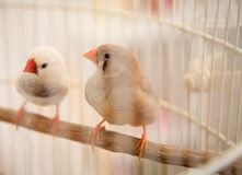 Птицы в клетке Стоковое фото RF