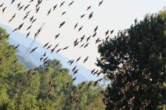Птицы в, который хранят 1 Стоковое фото RF