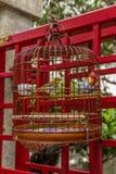 Птицы в клетках вися на птице садовничают - 14 Стоковые Изображения