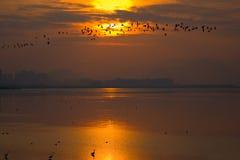 Птицы в небе Стоковая Фотография RF