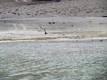 Птицы в озере Стоковая Фотография