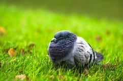 Птицы в парке с предпосылкой осени Стоковые Изображения RF