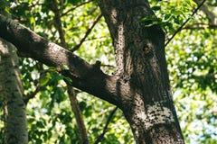 Птицы в парке Стоковое фото RF