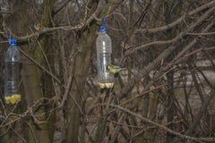 Птицы в парке Стоковая Фотография