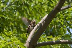 Птицы в парке Стоковое Фото