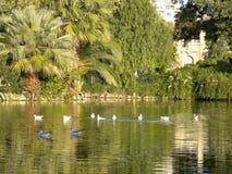 Птицы в парке Ciutadella Стоковая Фотография