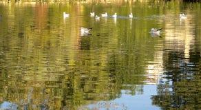 Птицы в парке Ciutadella Стоковые Изображения RF