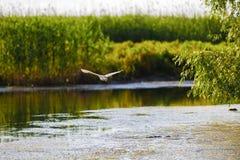 птицы в перепаде Дуная Стоковое фото RF