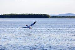 птицы в перепаде Дуная Стоковая Фотография RF