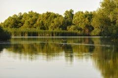 птицы в перепаде Дуная Стоковое Изображение