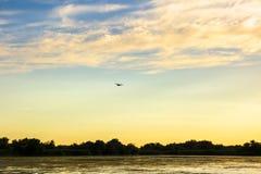 птицы в перепаде Дуная Стоковые Изображения RF