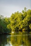 птицы в перепаде Дуная Стоковые Изображения