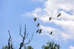 птицы в перепаде Дуная Стоковые Фотографии RF