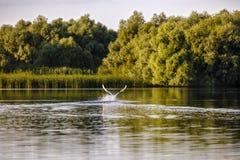 птицы в перепаде Дуная Стоковая Фотография