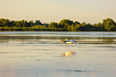 птицы в перепаде Дуная Стоковые Фото