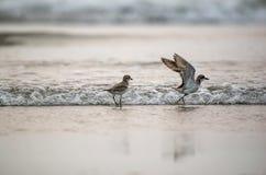 Птицы в пляже Стоковые Изображения RF