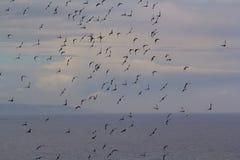 Птицы в полете Стоковая Фотография RF
