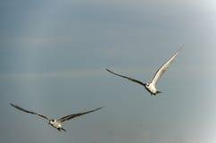 Птицы в полете Стоковое Изображение RF
