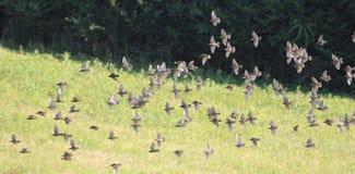 Птицы в поле 6 Стоковое Изображение