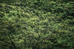 Птицы в свете солнца стоковая фотография