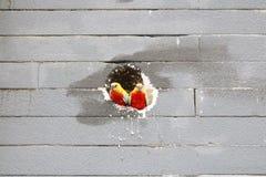 Птицы в стене Стоковые Фотографии RF