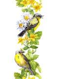Птицы в травах луга Флористическая акварель Безшовная нашивка границы Стоковые Фото