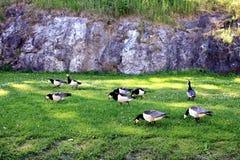 Птицы в лужке Стоковые Фото