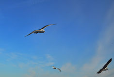 Птицы в Швеции Стоковое Изображение RF